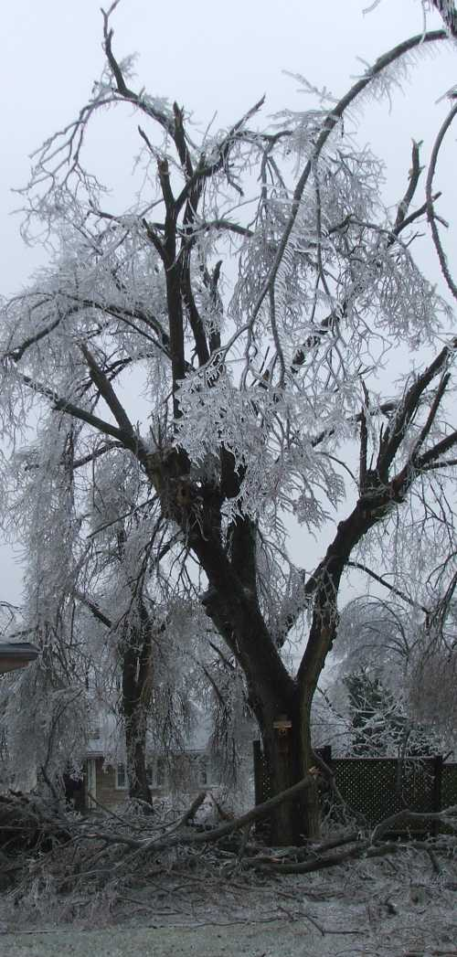 ice-storm-side-yard.jpg