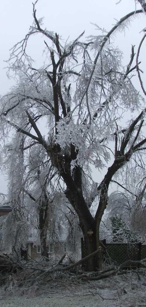 ice-storm-side-yard.jpg