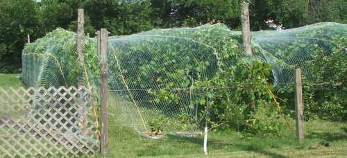15july07-bird-net-2.jpg