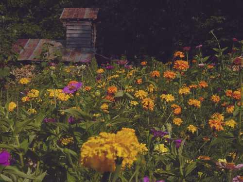 dougs-garden.jpg