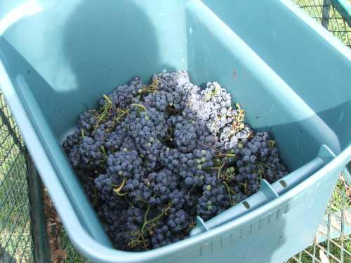 harvest-2006.jpg