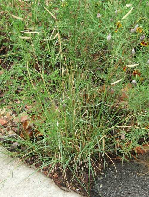 grass-3.jpg