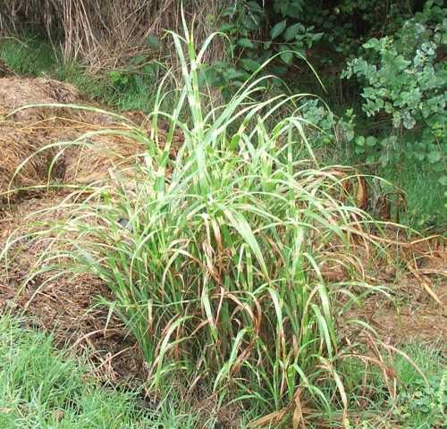 grass-4.jpg