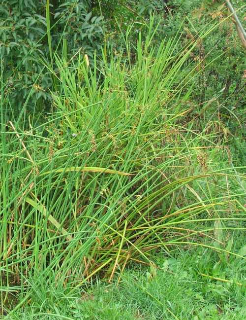 grass-5.jpg