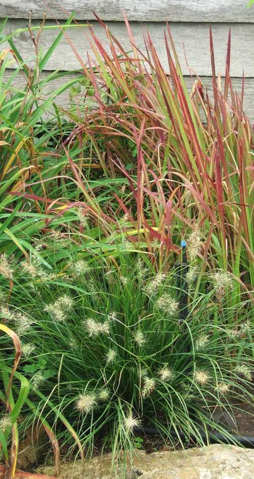 grass-6.jpg