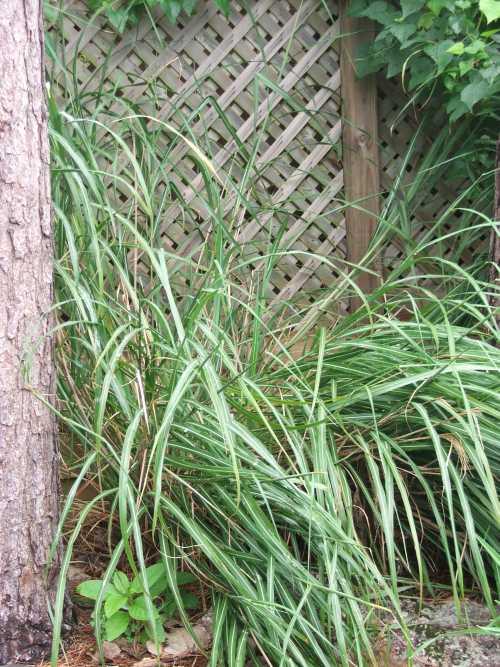 grass-7.jpg