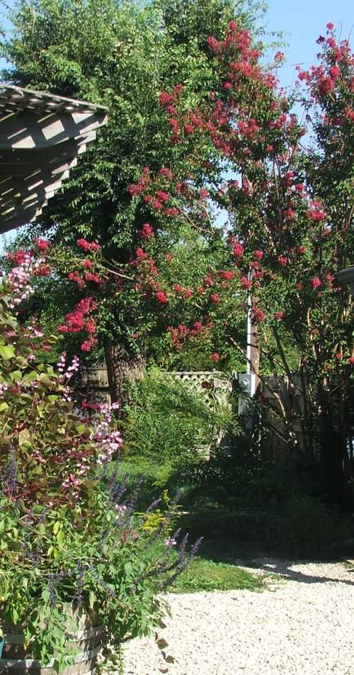 sept-gbbd-crepe-myrtle-and-patio-area.jpg