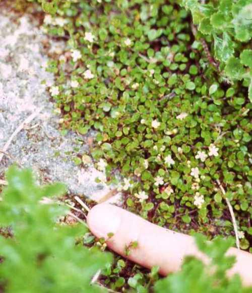 tiny-flowers.jpg
