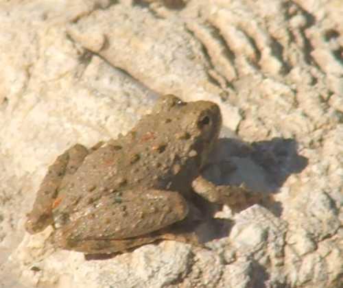 29sept2007-frog-1.jpg
