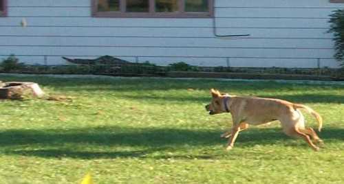 bouncing-dog-2.jpg