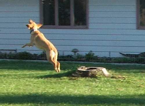bouncing-dog-3.jpg