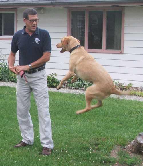 the-incredible-bouncing-dog-1.jpg