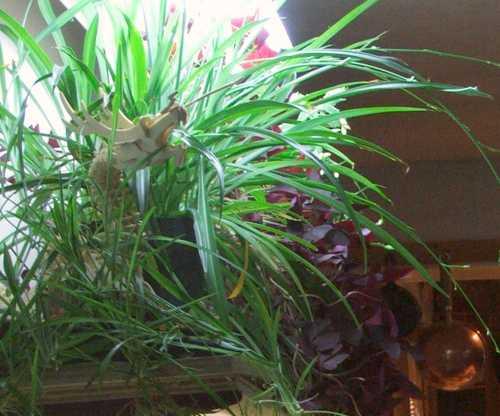 13-nov-2007-dragon.jpg
