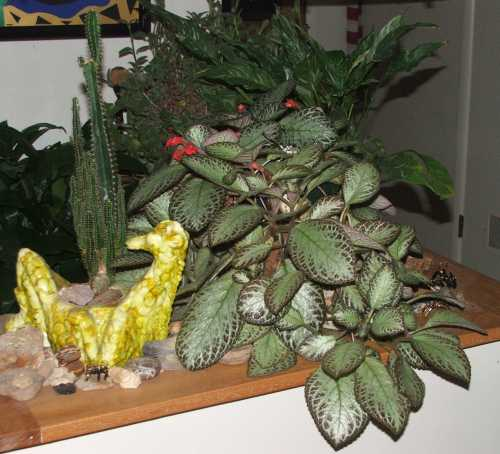 24-nov-entryway-planter.jpg