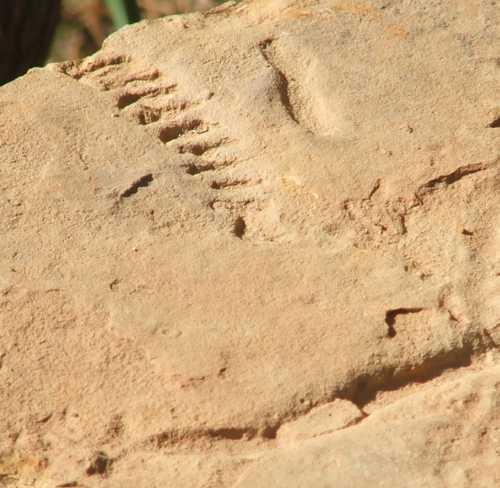 4-nov-1007-fossil.jpg