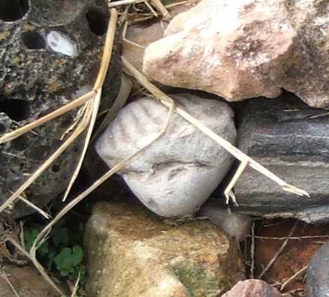 gbbd-nov-clam-fossil.jpg