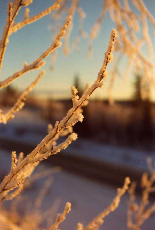 hoar-frost.jpg