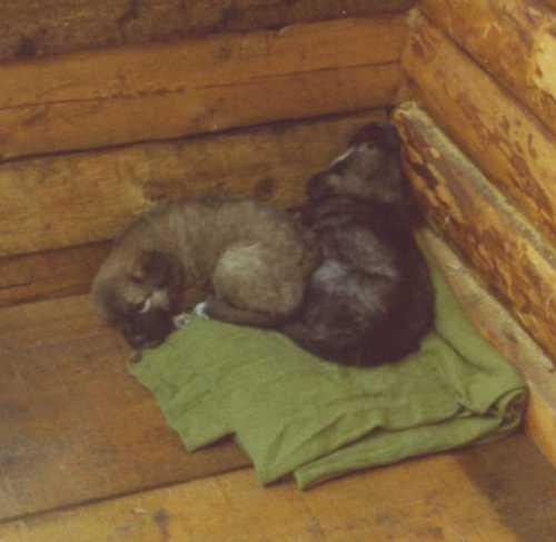 honey-and-cran-sleeping.jpg