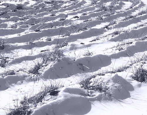 01february2008-labyrinth-in-snow.jpg
